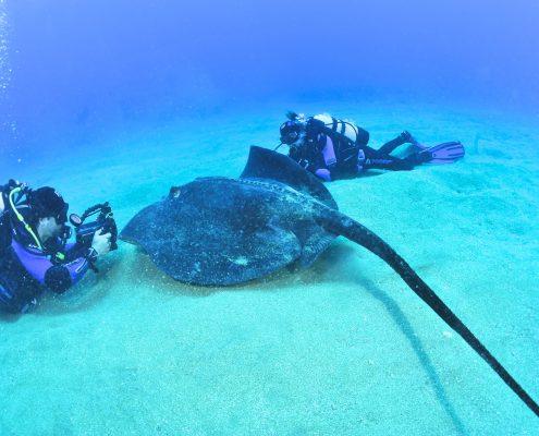 El acuario diving tenerife