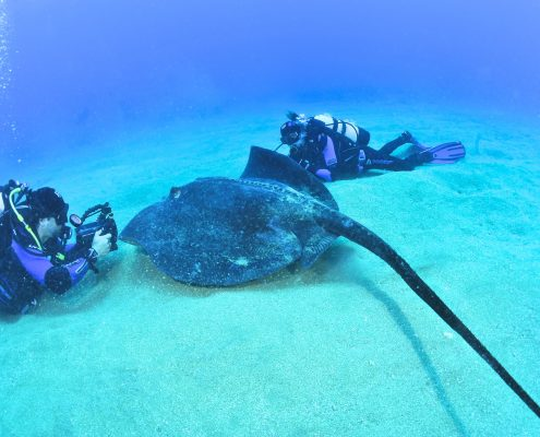 el aquario diving tenerife