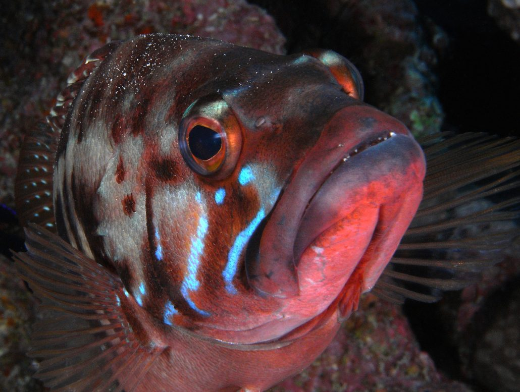 diving courses tenerife