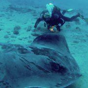 Atlantic Ray Diving Tenerife