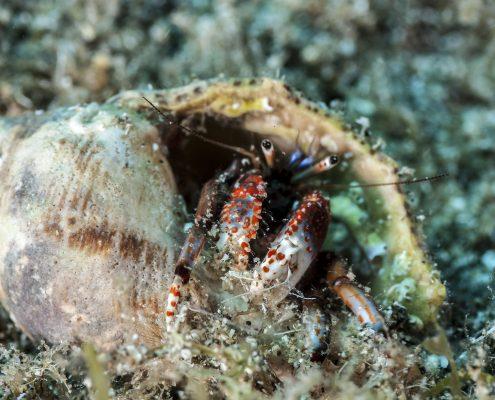 la caleta diving tenerife