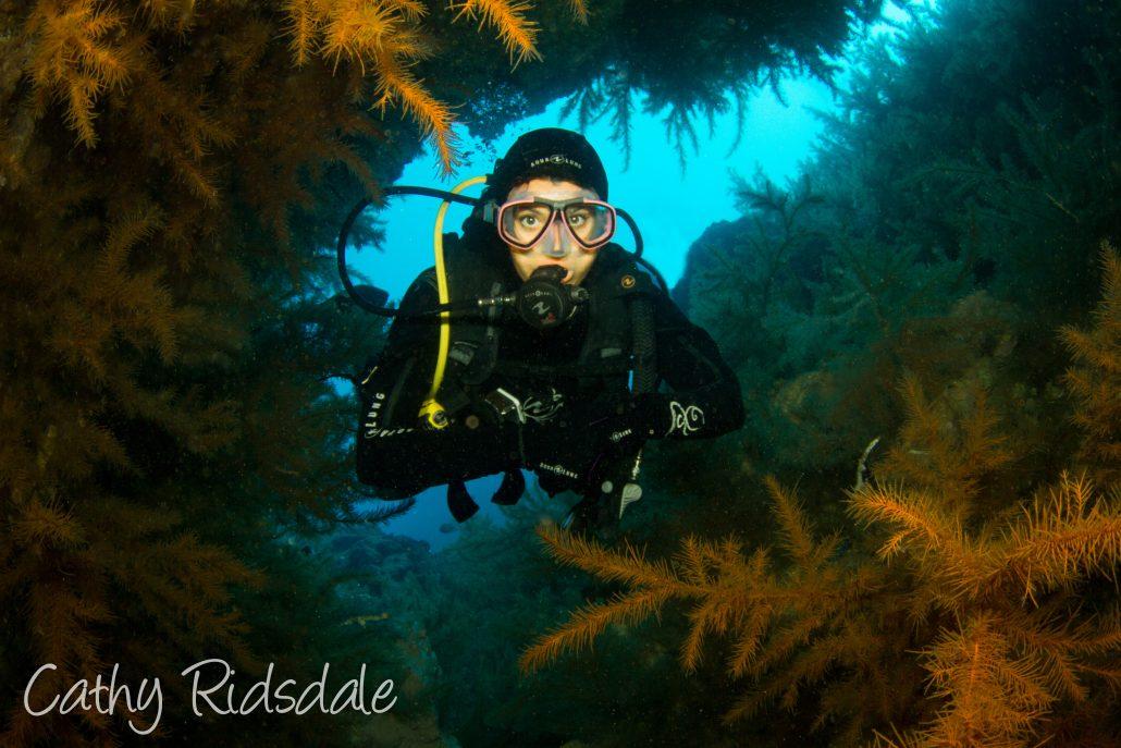 diver diving in tenerife