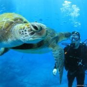 Try Diving Discover Scuba Diving With Turtles Tenerife